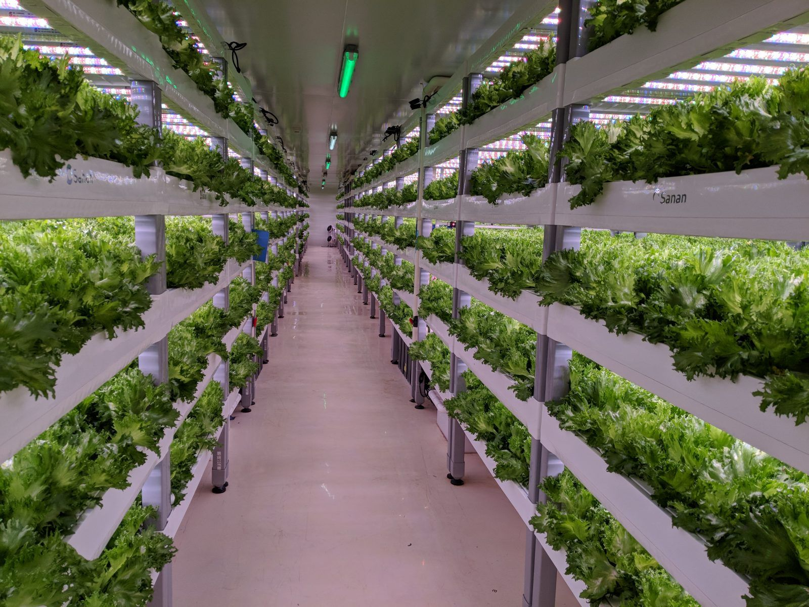 Indoor vertical farming in Asia and beyond Digging deep