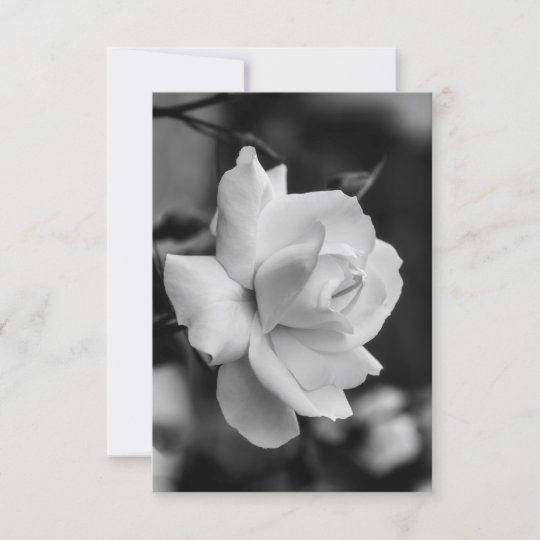 Tarjeta de felicitación con una rosa blanca en el jardín en blanco y negro