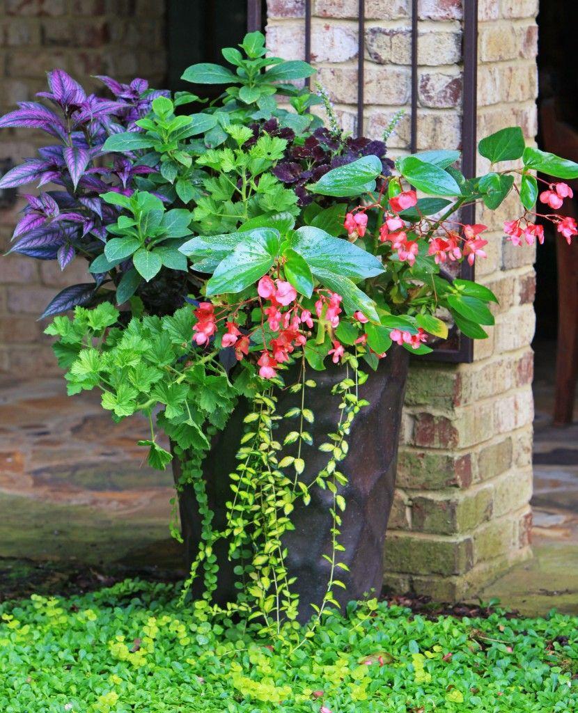 Http Www Thegracefulgardener Com Cat 13 Garden 400 x 300