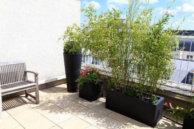 Bambuspflanzen Balkon-Sichtschutz Blumenkübel Balkon