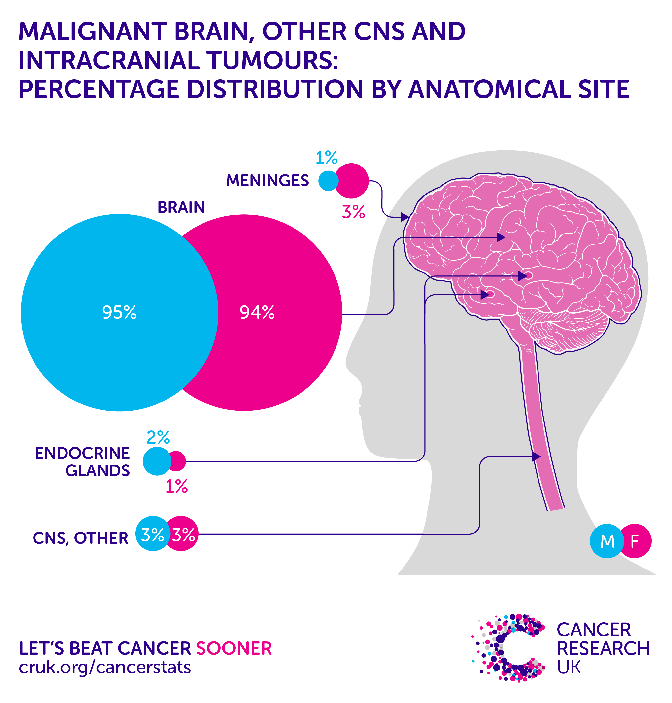 Cancer herbal treatment statistics - Brain Other Cns And Intracranial Tumours Incidence Statistics Cancer Research Uk
