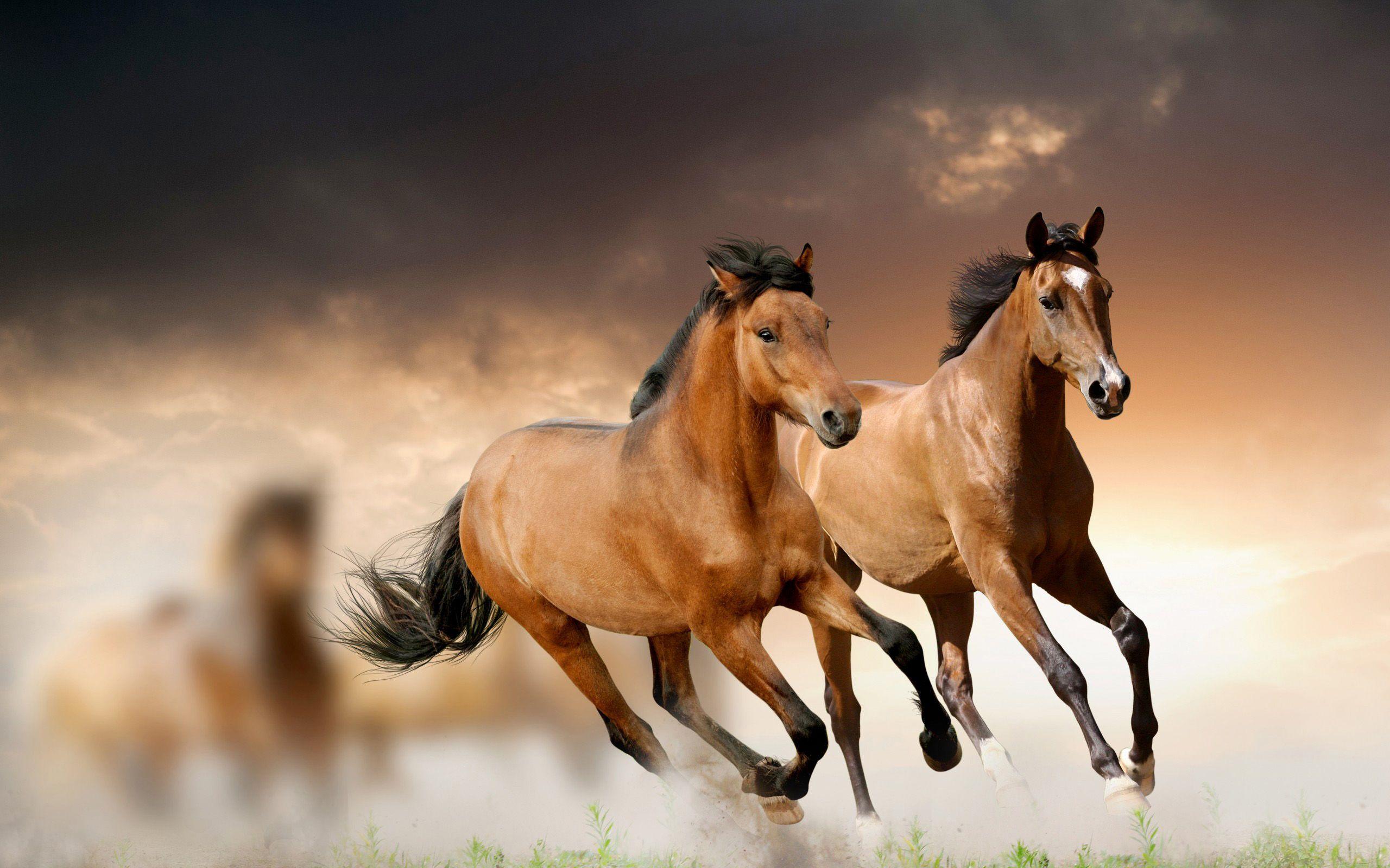 Must see Wallpaper Horse Laptop - 182a43c50e3bdfd364378e3d89fcd881  HD_833020.jpg