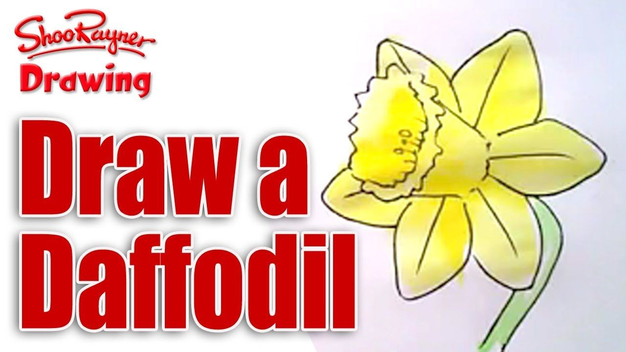 How to draw daffodils watercolor sketching etc board