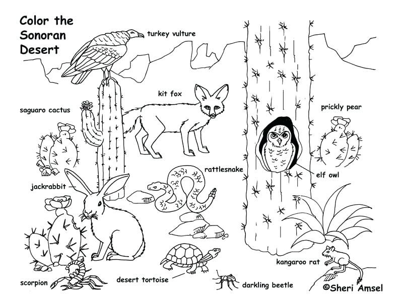 Animal Habitat Coloring Pages Grassland Animals Coloring Pages