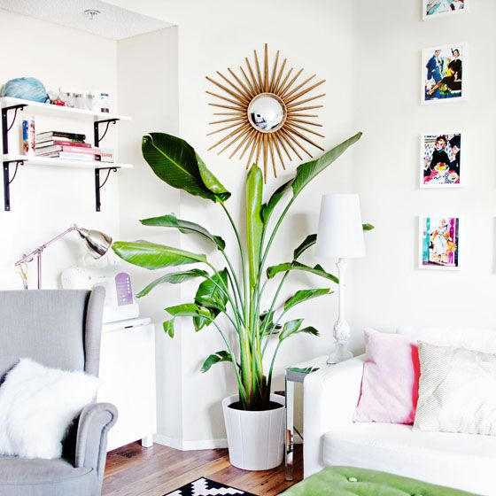 8 Indoor Plants That Will Turn Your Home Into A Tropical Oasis Fresh American Style
