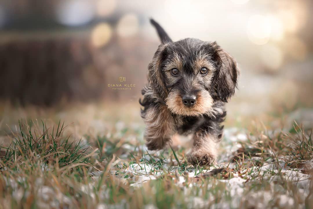 Hundefotografie im Märkischen Kreis und NRW Hunde