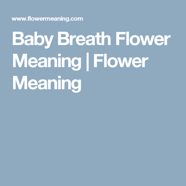 Baby Breath Flower Meaning Flower Meaning Flower Meanings Babys Breath Lily Flower