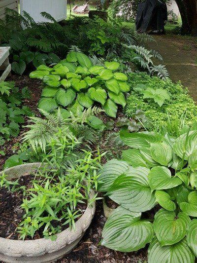Green Perennials Flowers - #flowers #green #Perennials - #Perennials