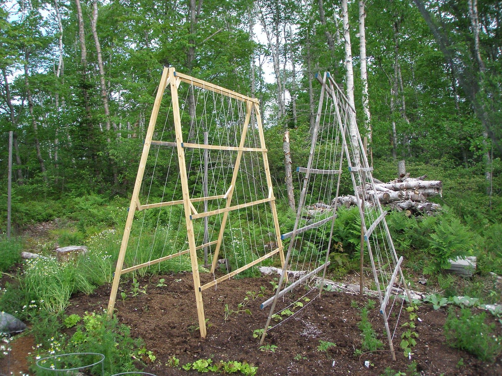 Homemade Trellis For Pole Beans and Cucumbers - Yahoo Image Search ...