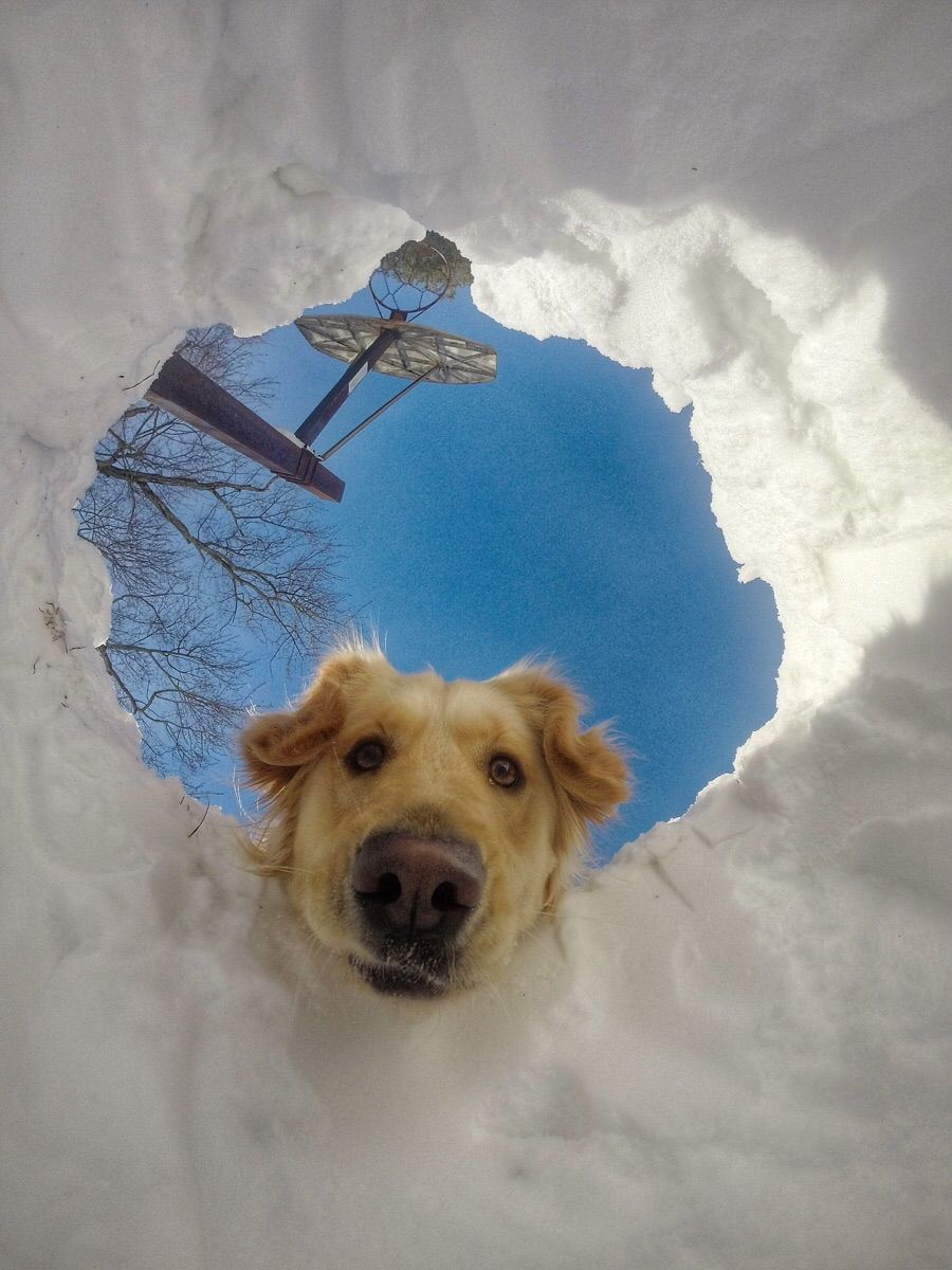 When you get buried in snow but your dog is a retriever