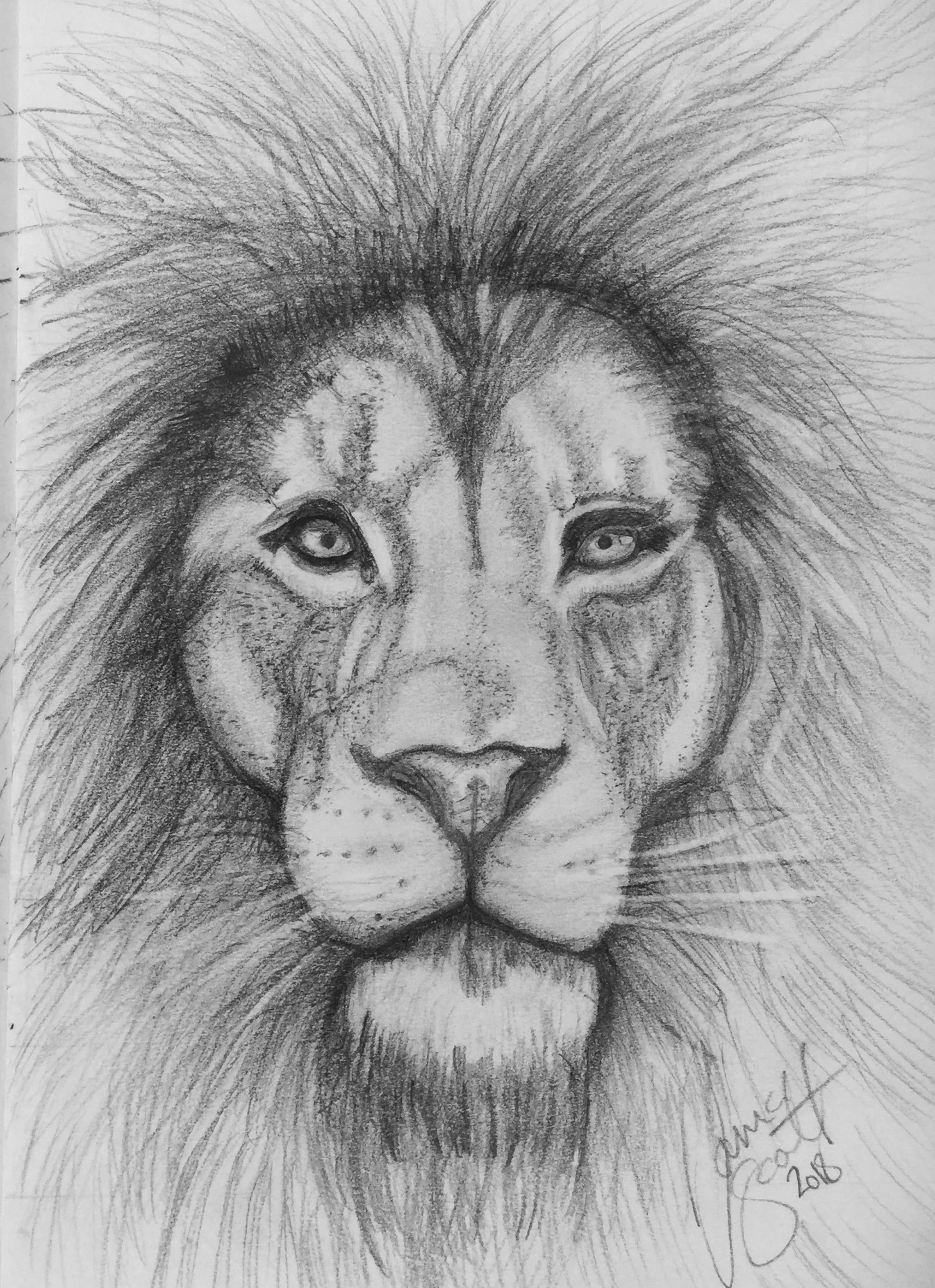 Lion by Tania Animal sketches, Cute animal drawings