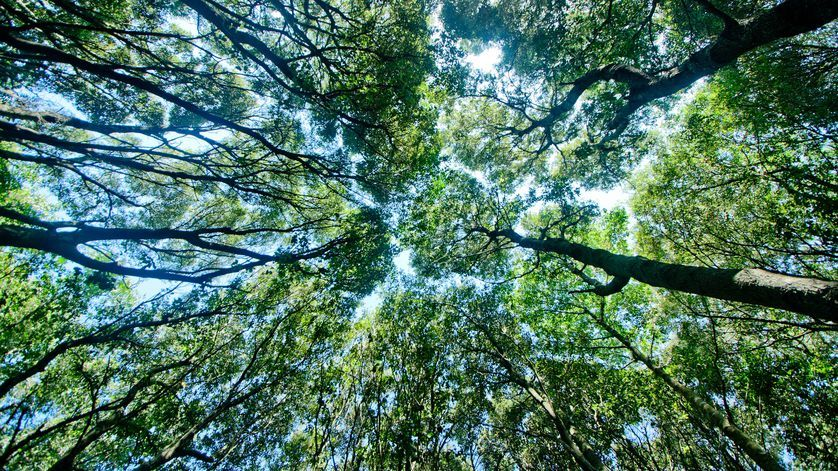 essay highlighting necessity conservation forests