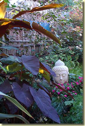 Diana's Hilltop Garden - buddha head