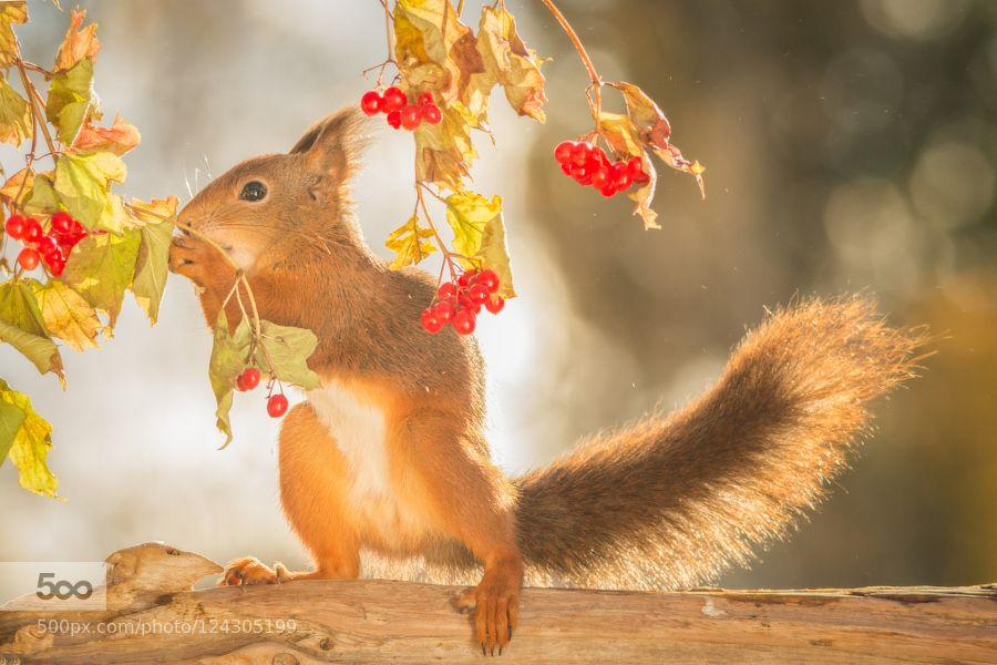 tails up by geertweggen. Please Like http://fb.me/go4photos and Follow @go4fotos Thank You. :-)
