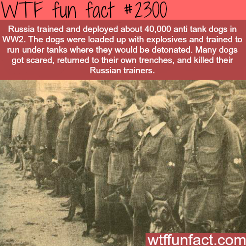Russian Anti Tank Dogs WTF Fun Facts Facts Pinterest Wtf - 10 interesting facts about russia