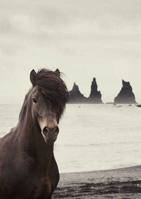el caballo peruno mmmmmm rico pa comer jjjajajajajajaj broma es muy genial el horse