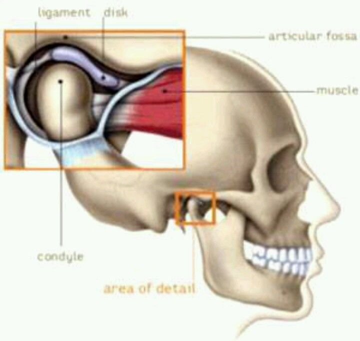 Temperomandibular Joint (Jaw joint) | miofuncional | Pinterest ...