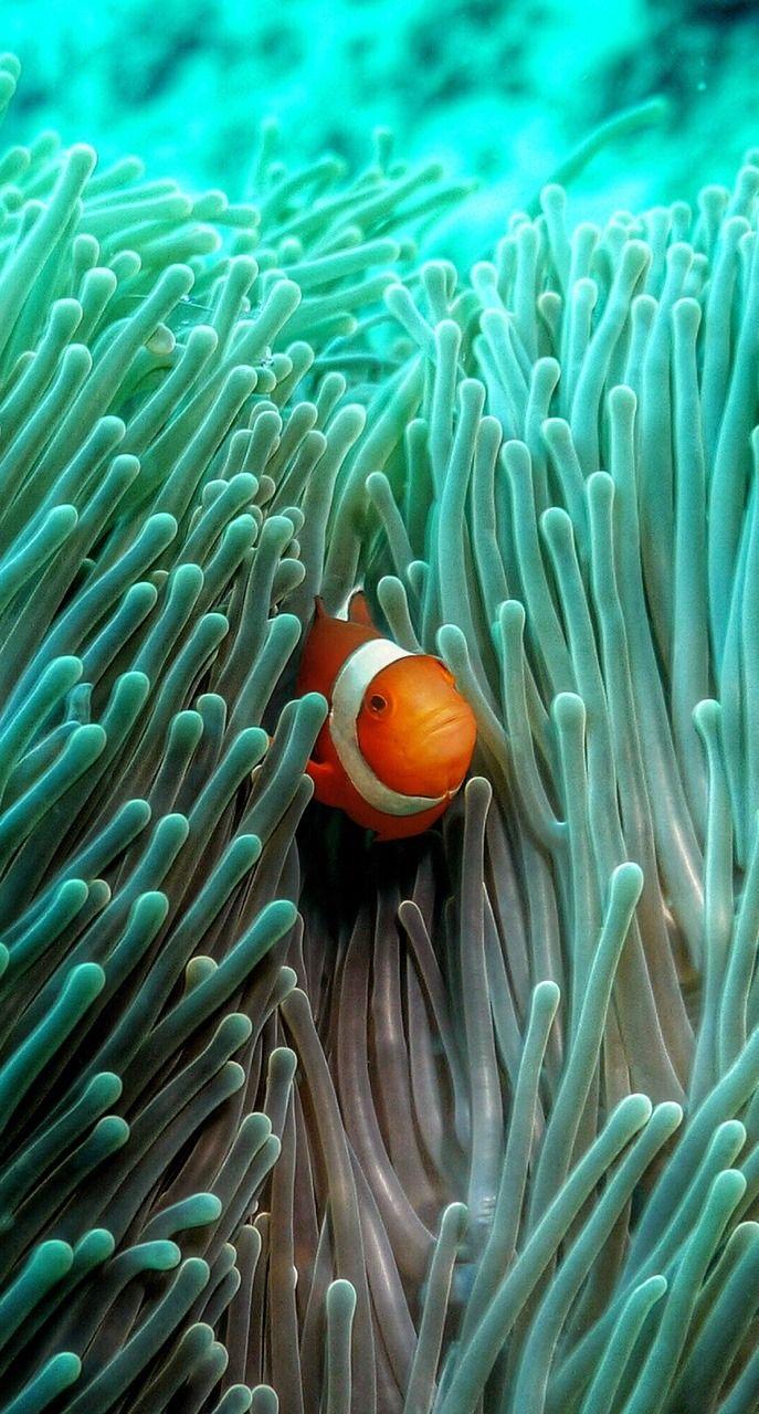 Blog Of Vallerik Nemo Underwater Wallpaper Beautiful Sea Creatures Fish Wallpaper