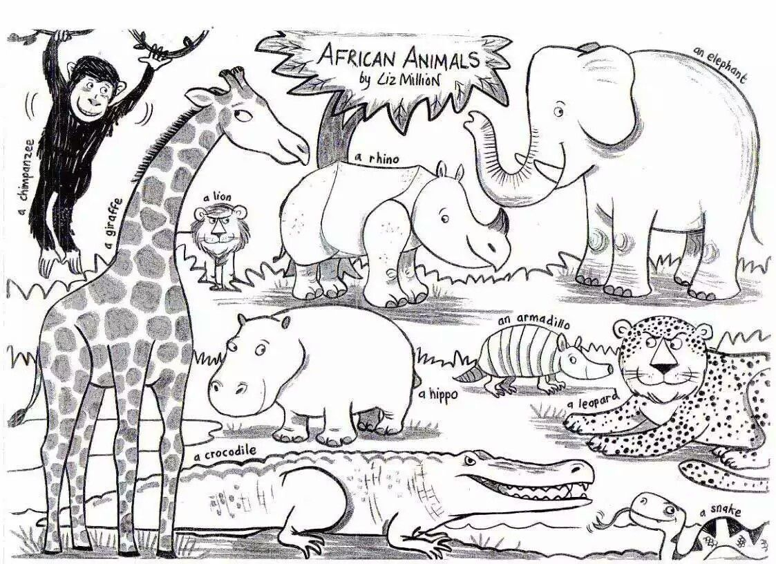 Pin By Orange Tango On Africa Animal Coloring Pages Animal Coloring Books Zoo Coloring Pages