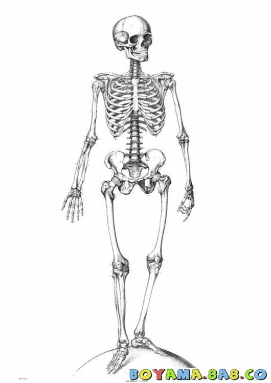 Iskelet Boyama Googleda Ara Materyal Anatomie Squelette Ve