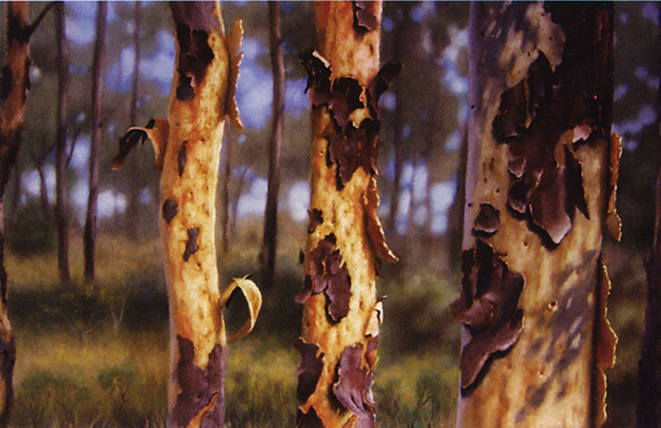"""Eucalyptus with peeling bark"" pastel, gouache and watercolour on paper by Pat Benkendorff."