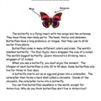 Image result for 1st grade life cycle of a butterfly 1st grade image result for 1st grade life cycle of a butterfly ibookread Read Online