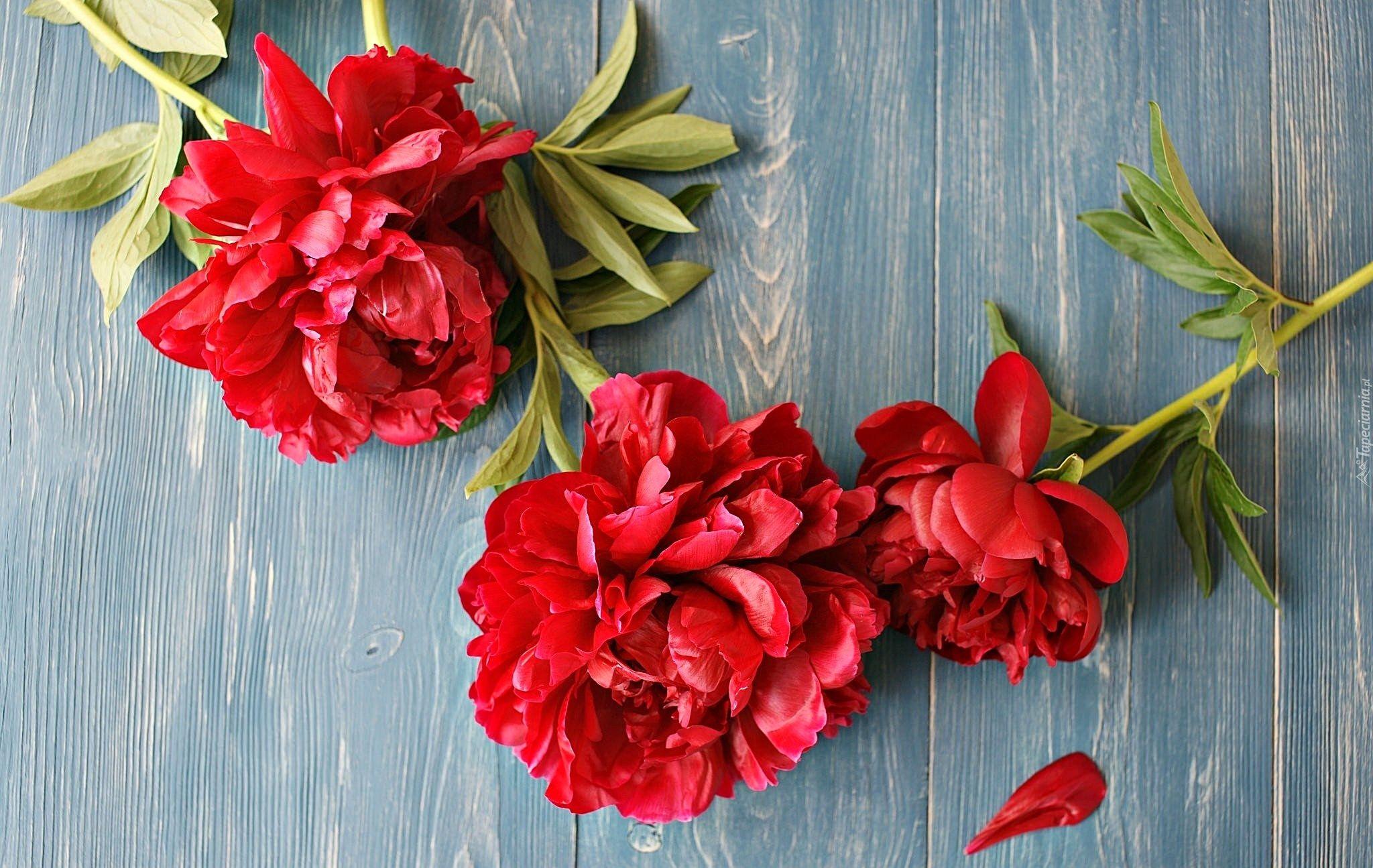 Piwonie Deski Kwiaty Flowers Plants Invitations