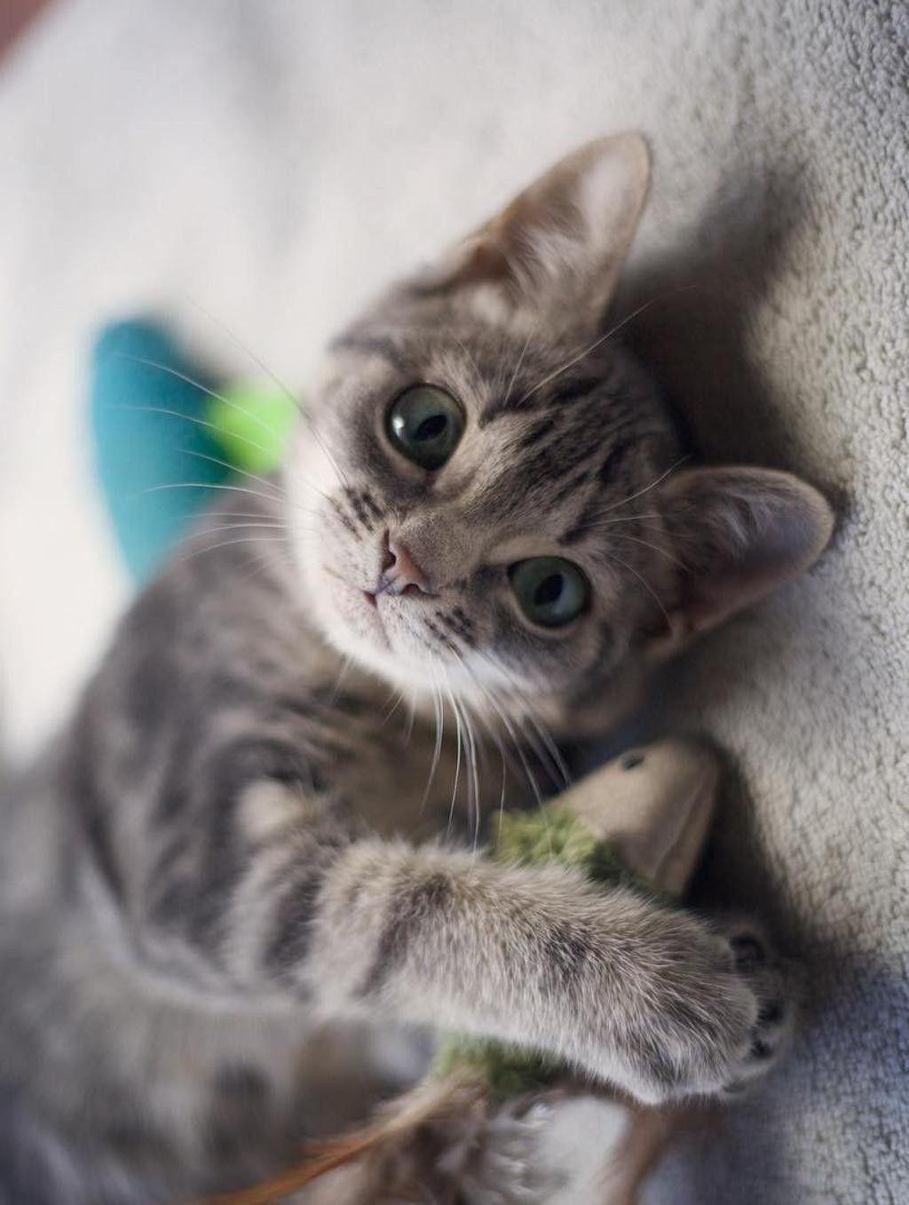 Precious Gatinhos adoráveis, Gatos, Lindos filhotes