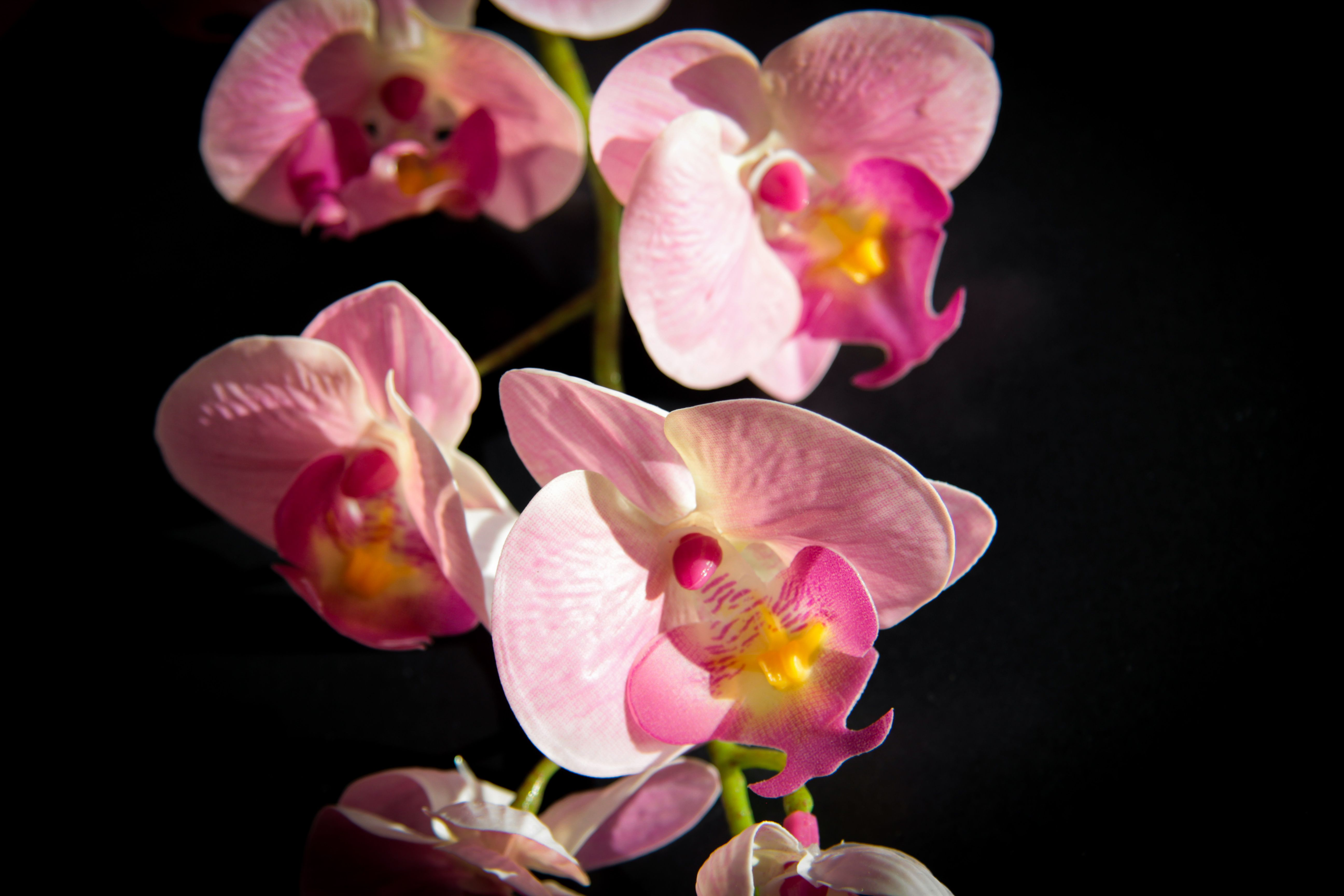 A Detail Of A Branch Of Orchid Flowers Photography Decoration Design Orchid Flower Purple Orchids Flowers Photography