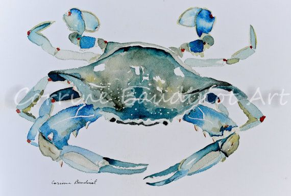 Watercolor Print Of Painting Of Blue Crab By Artist Corrine