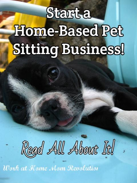 Work at Home: How to Start Your Own Pet Sitting Business