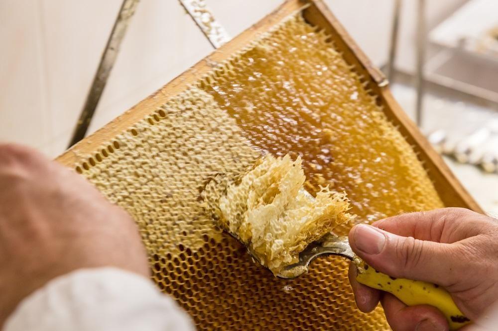 Herstellung Honig