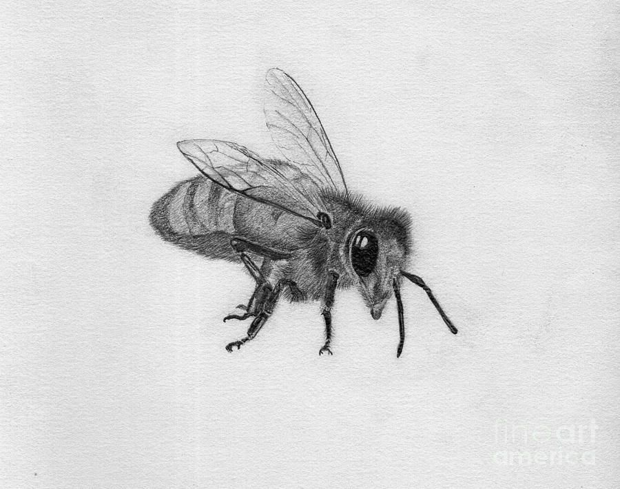 pencil insect drawings - Google Search