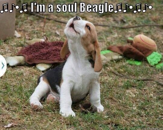 James Brown beagle