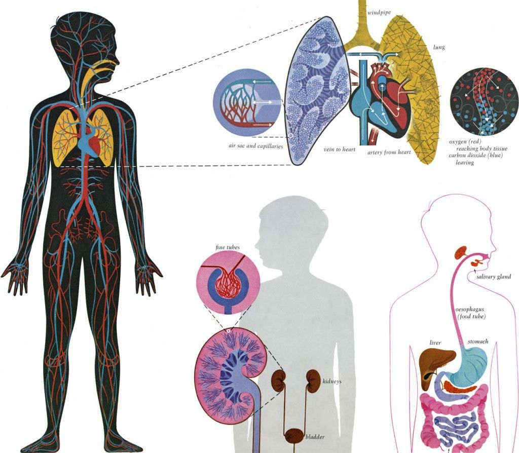 Golden Book of Biology | Human anatomy, Anatomy and Books