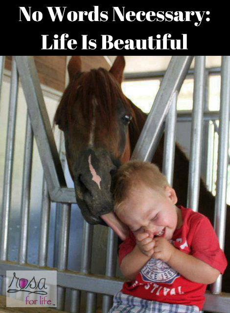 No Words Necessary Life Is Beautiful Funny Horse Memes Funny Animal Pictures Funny Horses