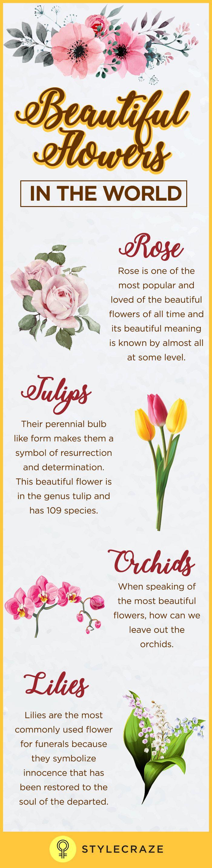 50 Beautiful Flowers Gallery Flower Wallpaper Hd