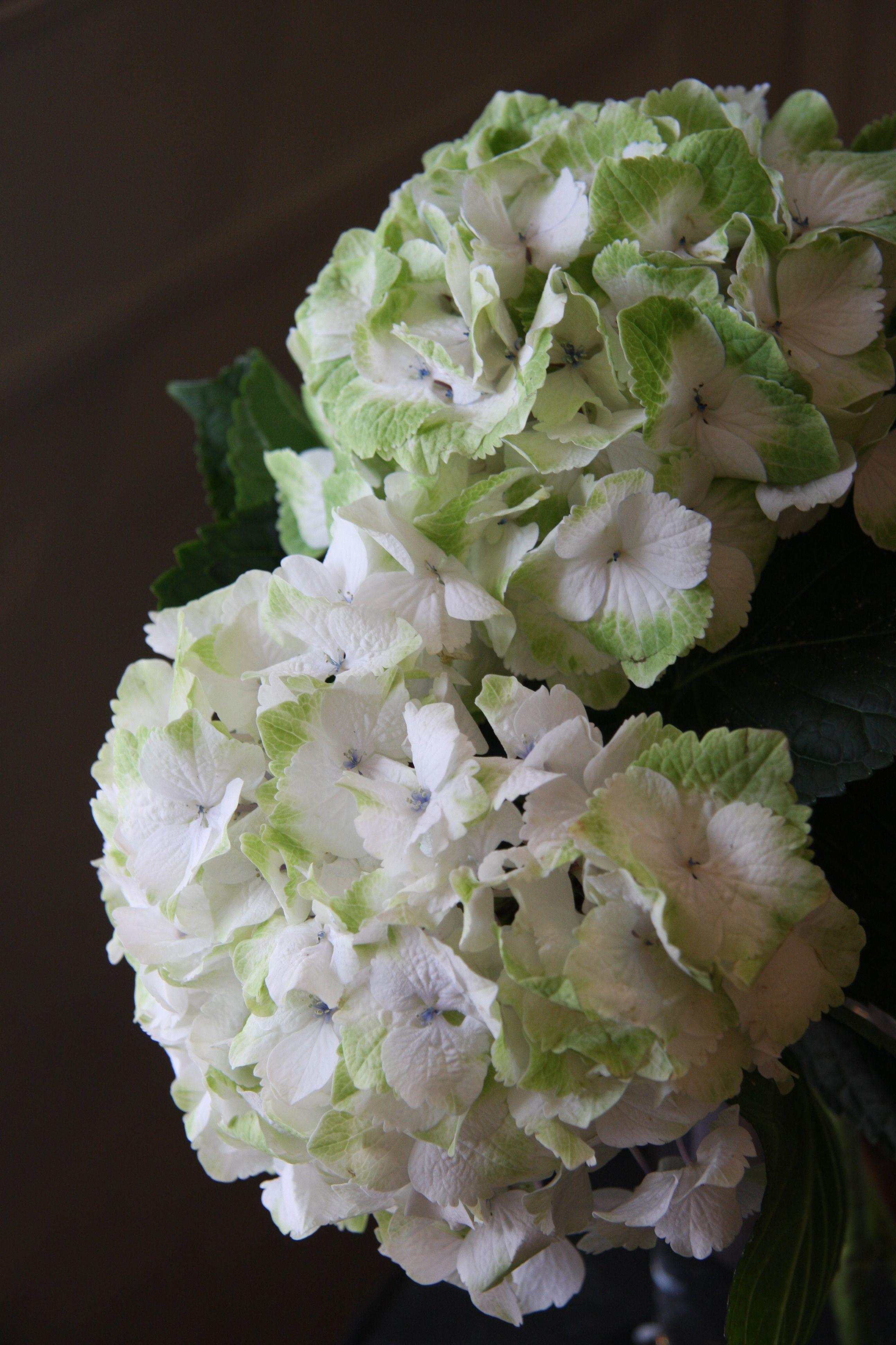 Oh How I Love Hydrangeas X Www Wisteria Avenue Co Uk Forever Flowers Sage Green Wedding Wedding Flowers