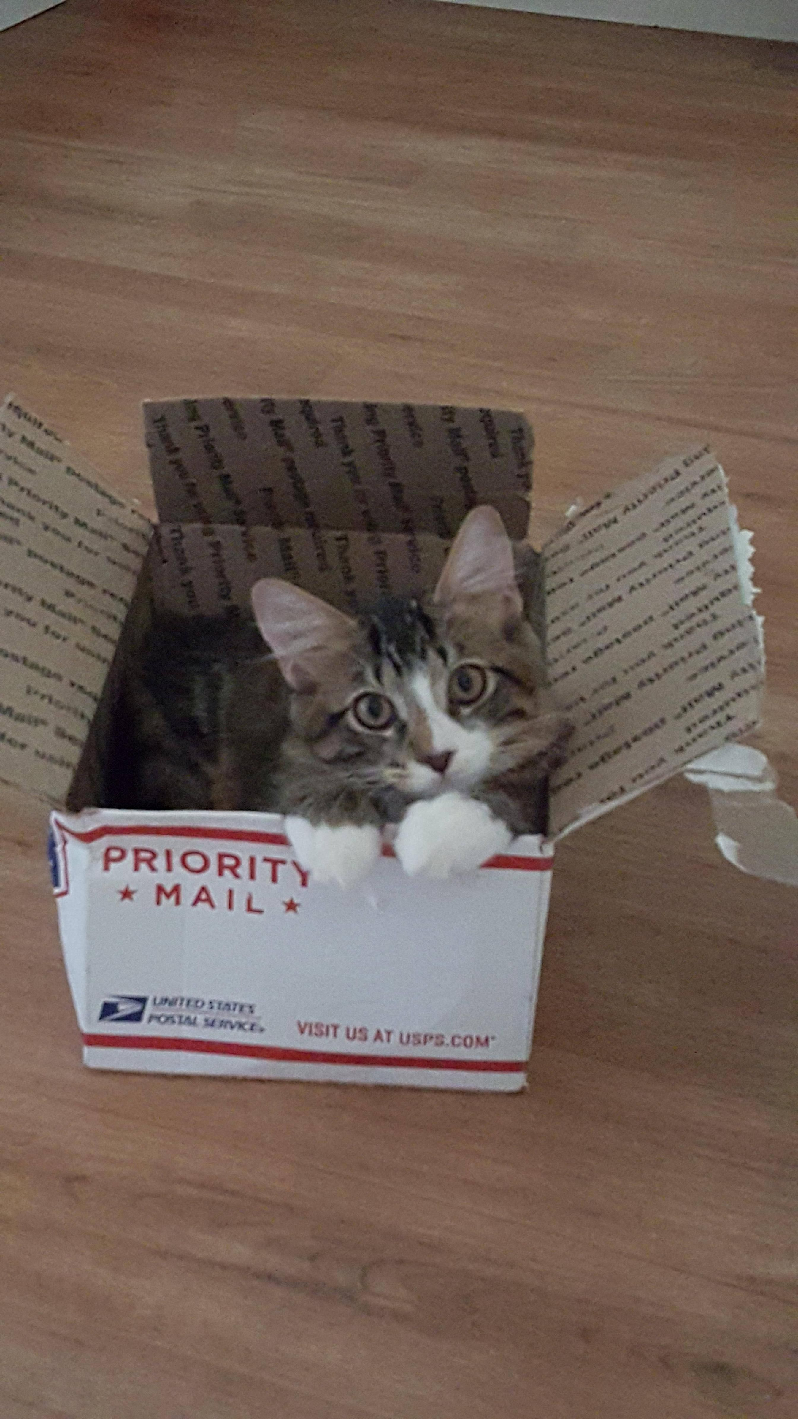 Purrr Ority Mail Cats Crazy Cats Silly Cats