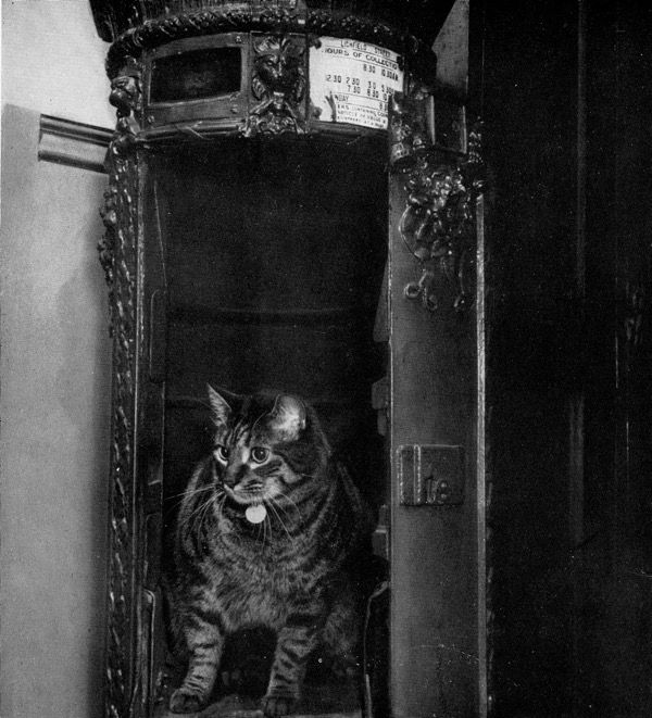 Tibs The Great 1950 64 The Official Post Office Cat At Headquarters Does Not Normally Live In This 1856 Pillarbox Cockne Office Cat Cats Cats And Kittens