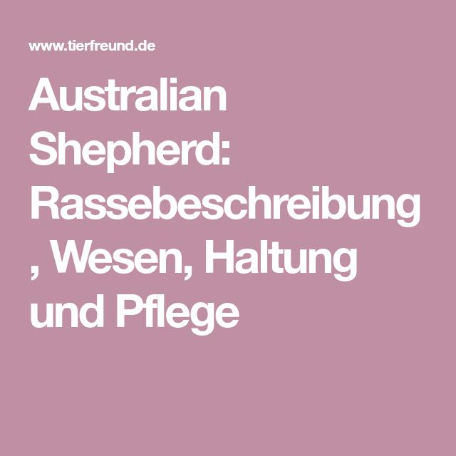 Australian Shepherd Rassebeschreibung Wesen Haltung Und Pflege Australian Shepherd Australian Shepherds Rasse