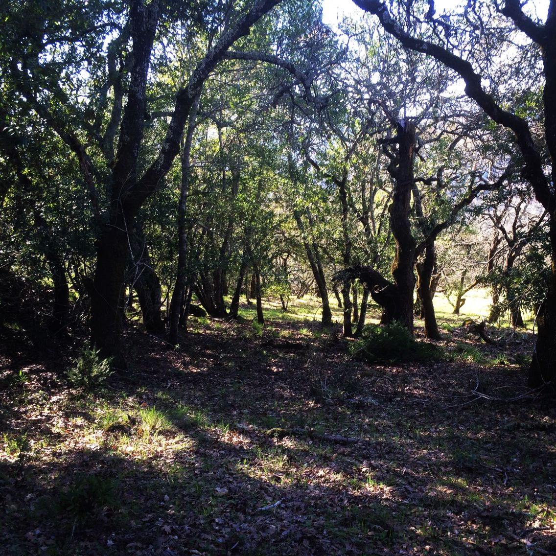 Off-trail in Annadel
