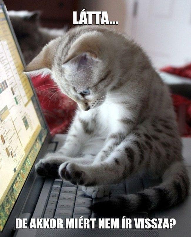 Szeretem biliárdot, a gasztro műsorokat, a macskákat.