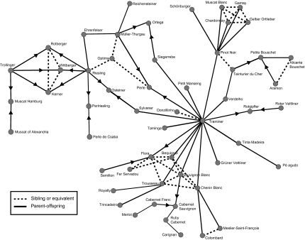 Grape varietal relationships