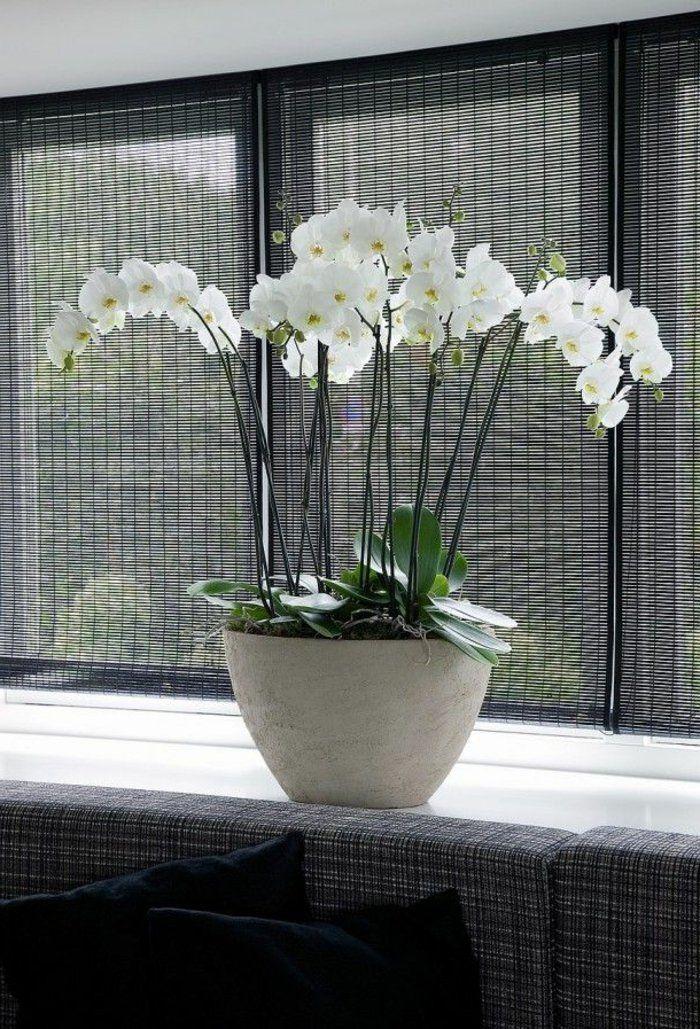 orchidee blanche deco