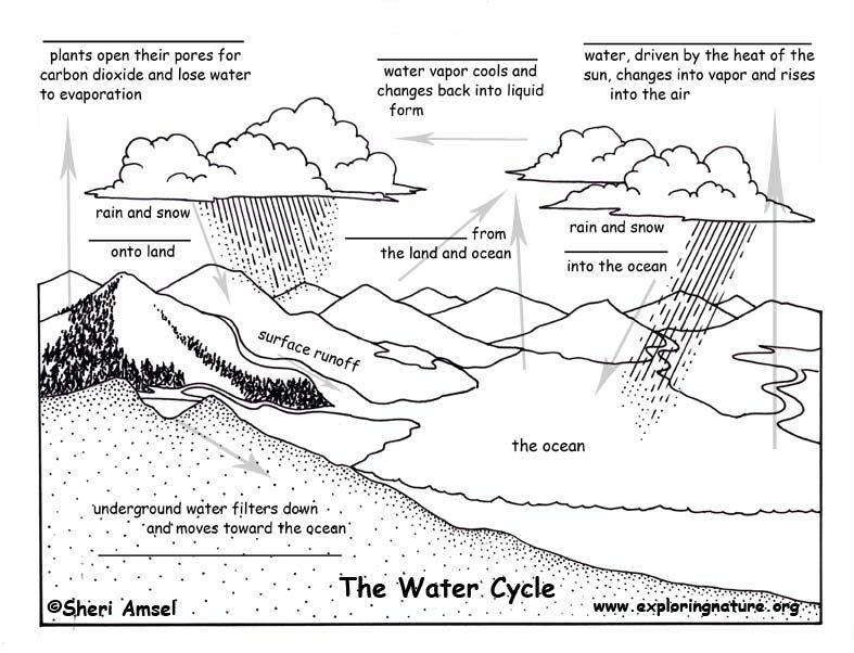 Cycles In Nature Worksheet The Blank Quiz Water Cycle