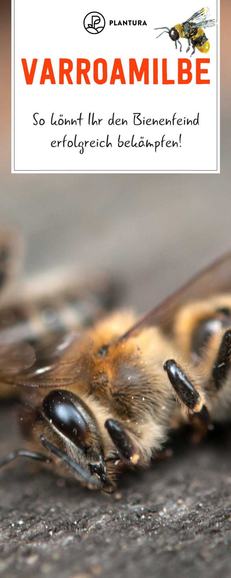 Varroamilbe Bekämpfen