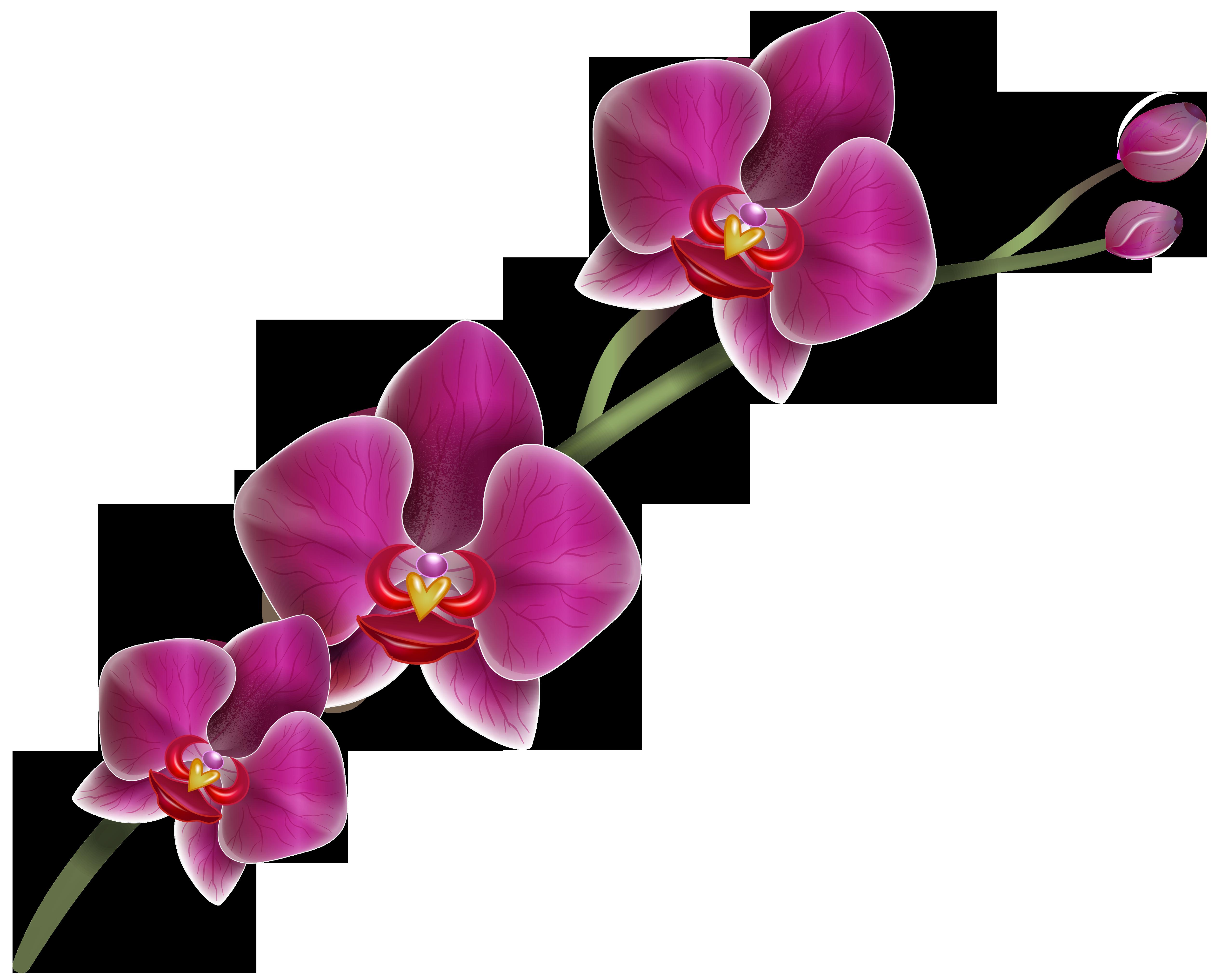 Purple Orchid Clipart Png Image Idee Idee Per La Casa