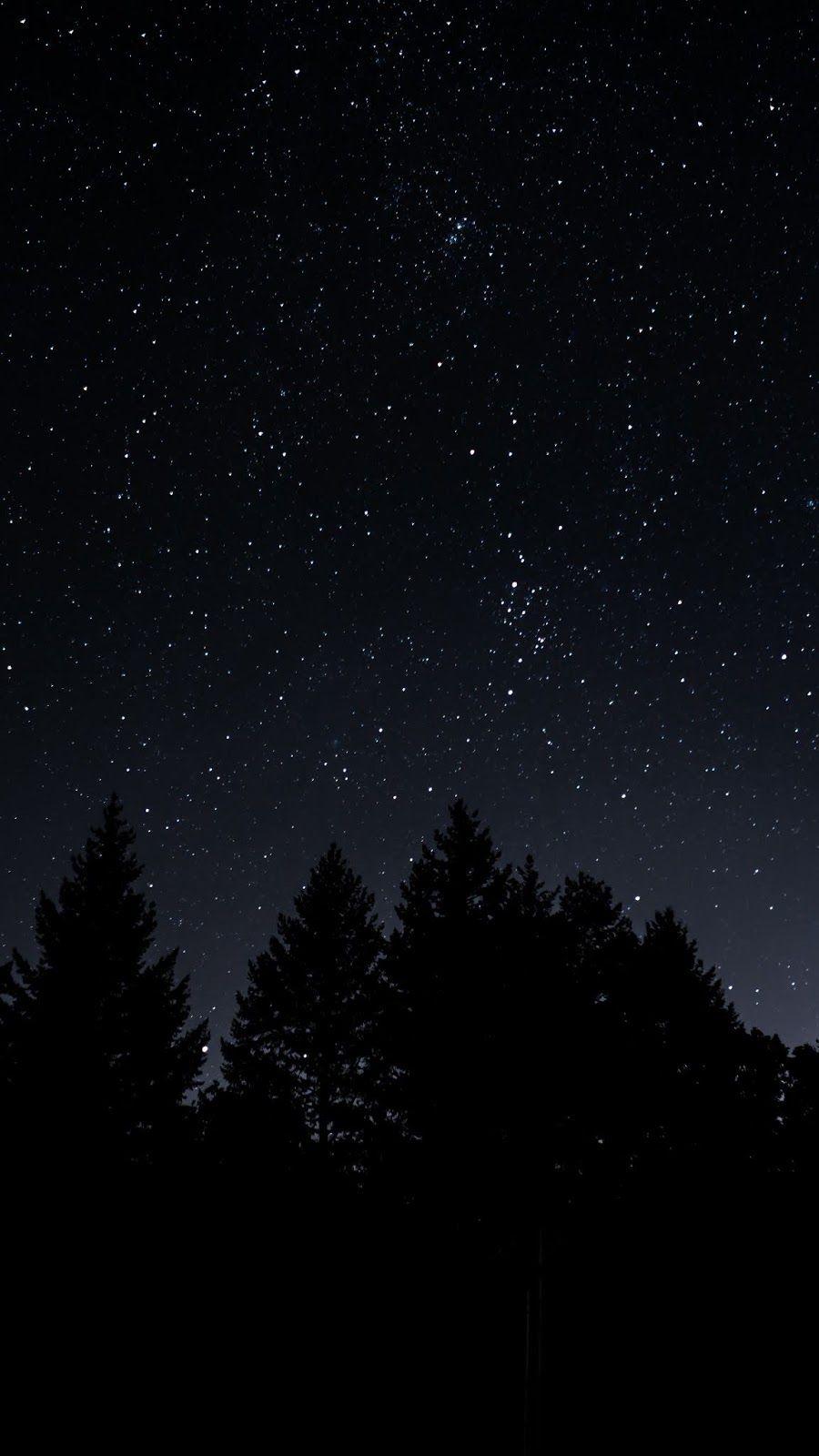 starry sky trees night