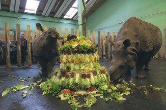2.narozeniny nosorozce Marusky03